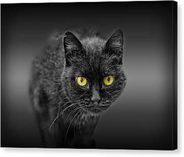 Black Cat Canvas Print by Peter Lakomy