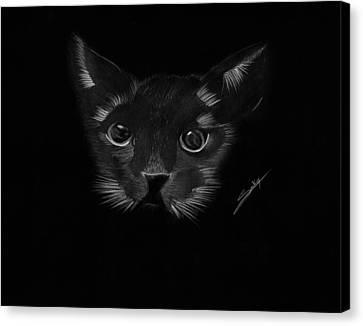 Black Cat Canvas Print by Saki Art