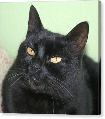 Black Cat Canvas Print by Tracey Harrington-Simpson
