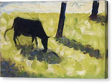 Black Cow In A Meadow, 1881 Canvas Print