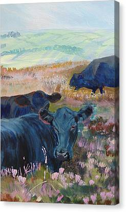Black Cows On Dartmoor Canvas Print