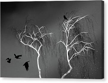 Canvas Print featuring the photograph Black Crows - White Trees  by Richard Piper