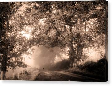 Black Dog On A Misty Road. Misty Roads Of Scotland Canvas Print by Jenny Rainbow