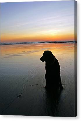 Black Dog Sundown Canvas Print by Pamela Patch