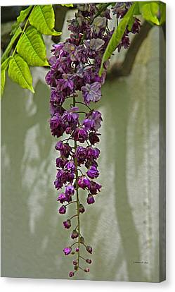 Black Dragon Wisteria Canvas Print