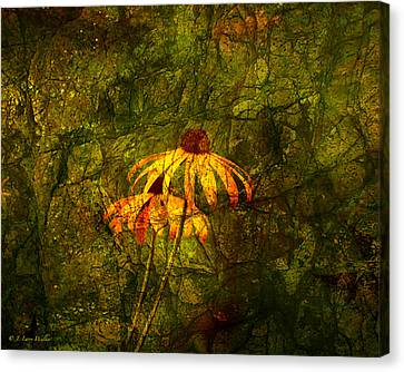 Black-eyed Susan Abstract Canvas Print by J Larry Walker