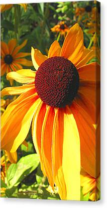Canvas Print featuring the photograph Black-eyed Susan In Your Face by Brooks Garten Hauschild