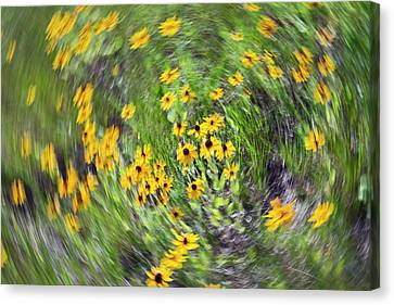 Black-eyed Susan Flowers Canvas Print by Jim West