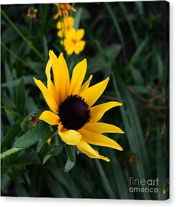 Canvas Print featuring the photograph Black-eyed Susan Glows With Cheer by Luther Fine Art
