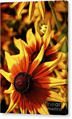Canvas Print featuring the photograph Black Eyed Susan by Linda Bianic