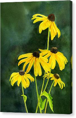 Black Eyed Susans Dark Background 2 Canvas Print by Sharon Freeman