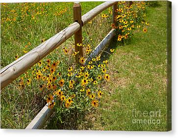Black Eyed Susans In A Wildflower Meadow Canvas Print by Louise Heusinkveld