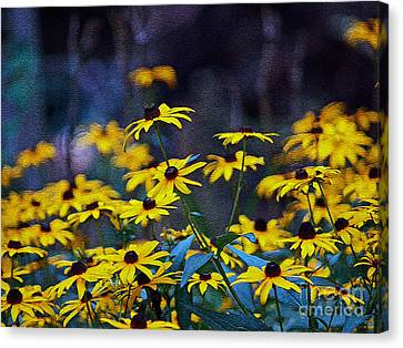 Canvas Print featuring the photograph Black-eyed Susans by Patricia Griffin Brett