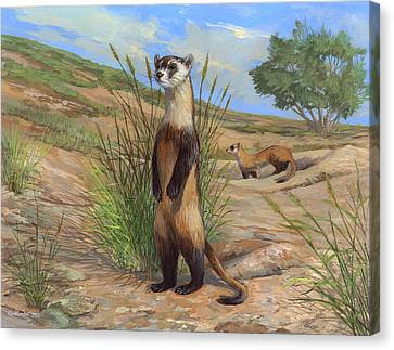 Black-footed Ferret Canvas Print by ACE Coinage painting by Michael Rothman