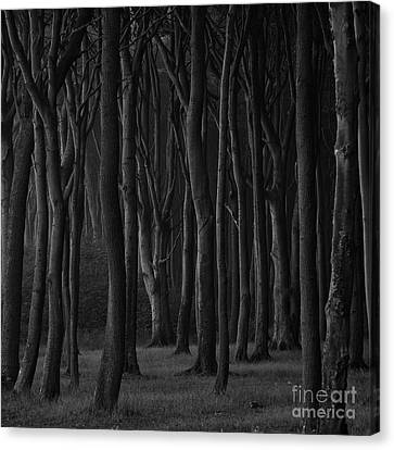Black Forest Canvas Print by Heiko Koehrer-Wagner