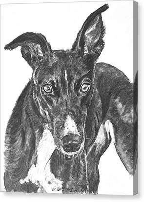 Black Greyhound Sketch Canvas Print by Kate Sumners