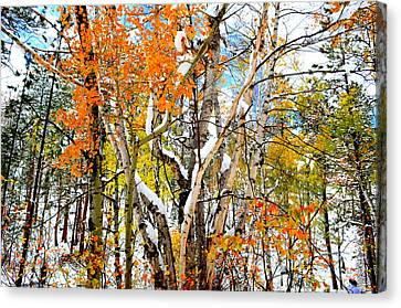 Black Hills Entanglement Canvas Print