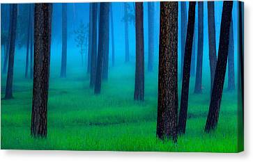 Black Hills Forest Canvas Print