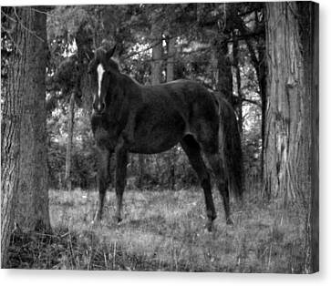 Black Horse Canvas Print by Joyce  Wasser