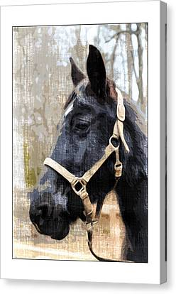 Black Horse Canvas Print by Susan Leggett