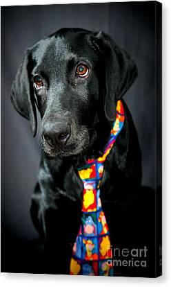 Black Lab Portrait Canvas Print by Catherine Reusch Daley