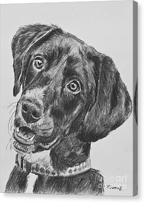 Black Lab Puppy Charcoal Sketch Canvas Print by Kate Sumners