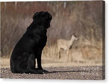Black Lab Watching Deer Canvas Print by Linda Freshwaters Arndt