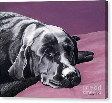 Black Labrador Beauty Sleep Canvas Print by Amy Reges