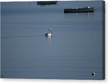 Black Line Pelican  Calm Water Canvas Print