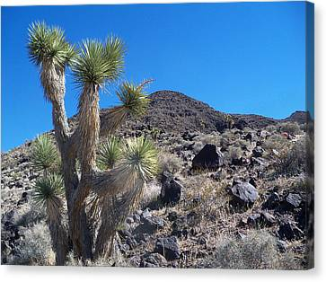 Canvas Print featuring the photograph Black Mountain Yucca by Alan Socolik