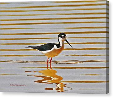 Canvas Print featuring the photograph Black Neck Stilt Standing by Tom Janca
