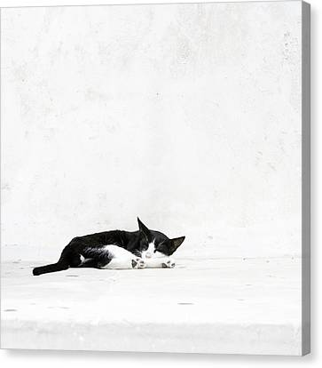 Canvas Print featuring the photograph Black On White by Lisa Parrish