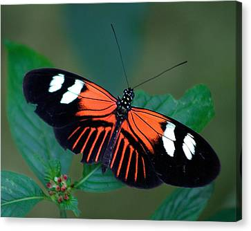Black Orange And White Canvas Print