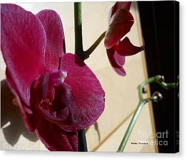 Canvas Print featuring the photograph Black Orchid by Ramona Matei