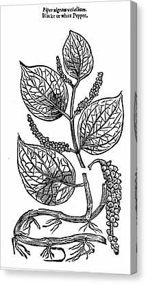 Black Pepper Canvas Print