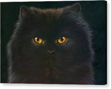 Black Persian Canvas Print by Andrew Farley