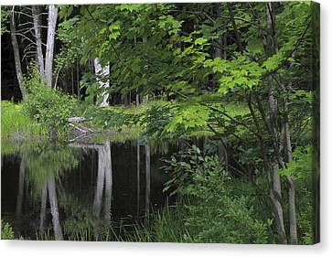 Canvas Print featuring the photograph Black Pond And Maple by Colleen Williams