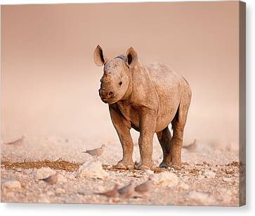 Black Rhinoceros Baby Canvas Print by Johan Swanepoel