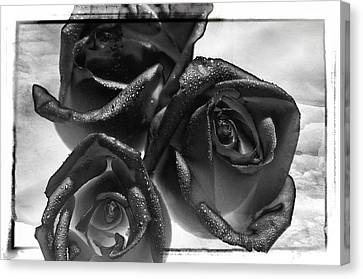 Canvas Print featuring the photograph Black Roses by Thomas Born