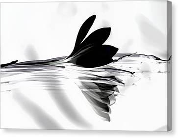 Black Silk Crocus Canvas Print by  Andrea Lazar
