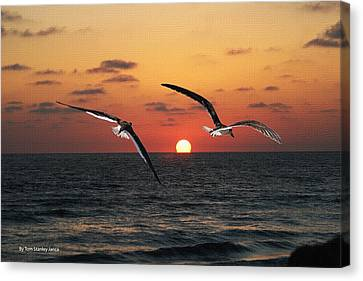 Canvas Print featuring the photograph Black Skimmers At Sunset by Tom Janca