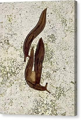 Slug Canvas Print - Black Slugs With Eggs by Ian Gowland