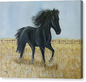Black Stallion Trot Canvas Print by Kelly Mills