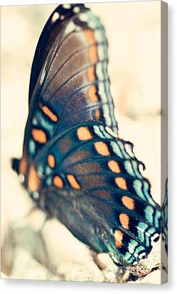 Black Swallowtail Butterfly Canvas Print by Kim Fearheiley