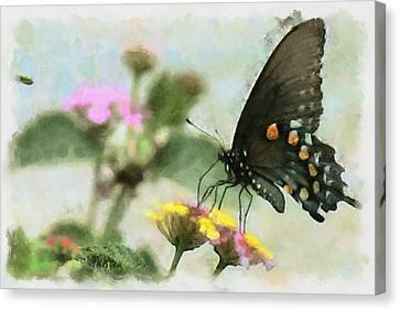 Black Swallowtail Canvas Print by Lorri Crossno