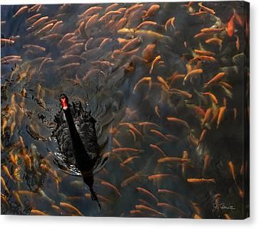 Black Swan Canvas Print by Joe Bonita