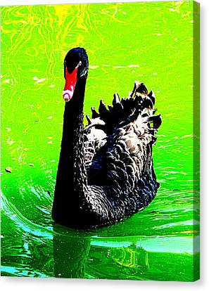 Black Swan Canvas Print by John King