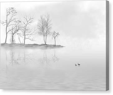 Black Swans Swimming In A Lake Canvas Print by Bijan Studio