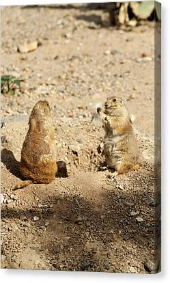 Canvas Print featuring the glass art Black Tailed Prairie Dogs by Daniel Hebard
