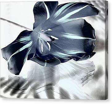Black Tulip Canvas Print by  Andrea Lazar